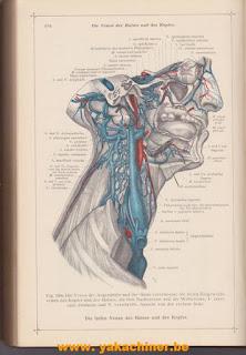 Anatomischer Atlas, volume 2, 1923