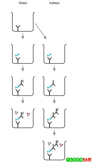 Principle of various enzyme immunoassays for antigen.