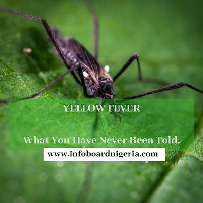 Yellow fever in Nigeria