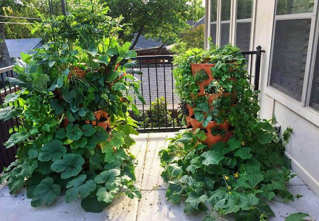 gardening for health - benefits of gardening