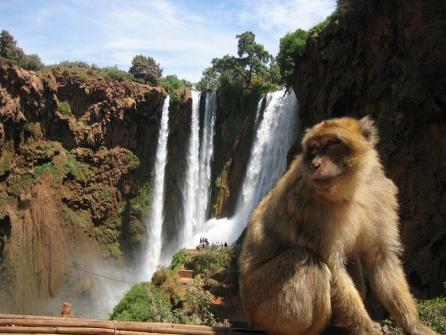 Depuis Marrakech : 1 journée aux cascades d'Ouzoud 30€/pers