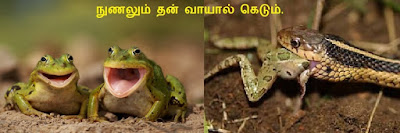 Animals and proverbs frog snake