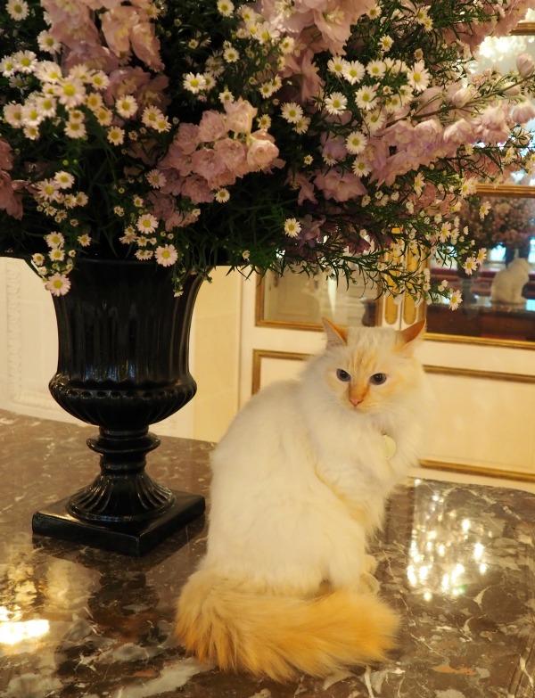 le bristol hotel cat