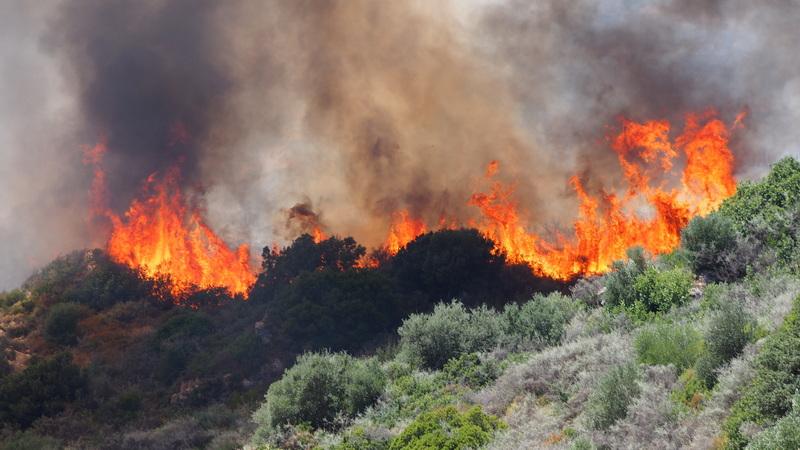 Η καταστολή δασικών πυρκαγιών, σε σχέση με την πρόληψη, έχει ένα τεράστιο οικονομικό κόστος