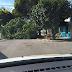 Árvore cai e rua Adolfo Gordo fica interditada