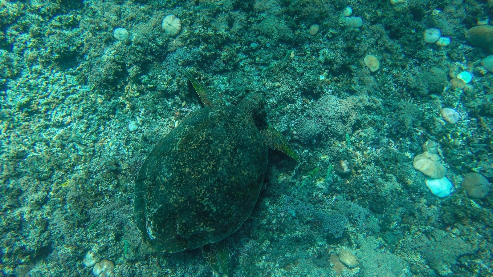 Snorkeling in Gili T Indonesia