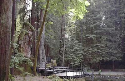 Bohemian Grove, Gunung Rio, California