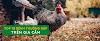 Top 10 bệnh thường gặp trên gà cần phòng ngừa ngay khi gà nở