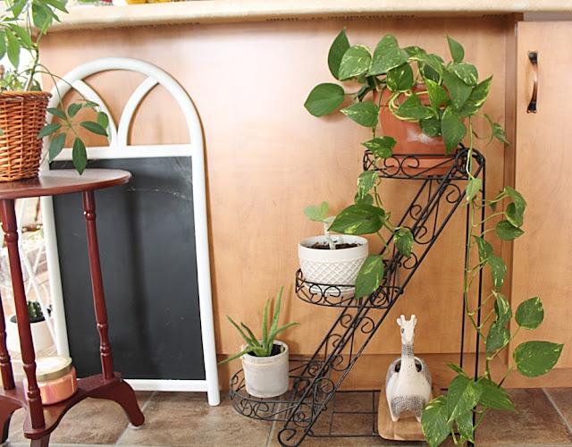 Agrandir sa collection de plantes à bas prix