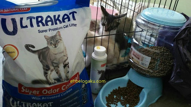 BELI BARANG KUCING, shopping barangan kucing, kittens feeders, Kitten dry food,