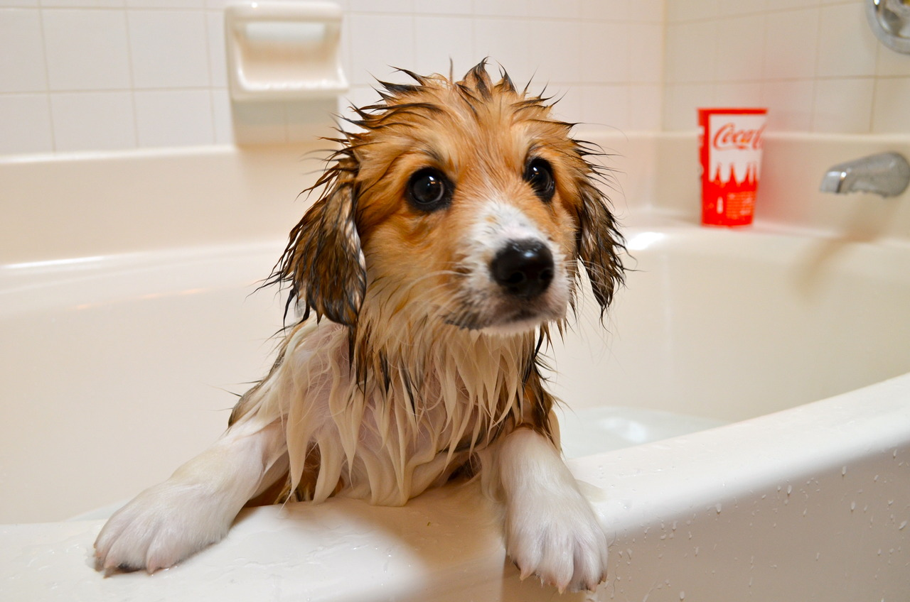 Cute dogs - part 147, cute dog and puppy pictures, funny dog photos