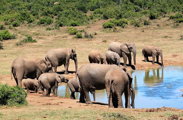 Características da População de Elefantes Africanos