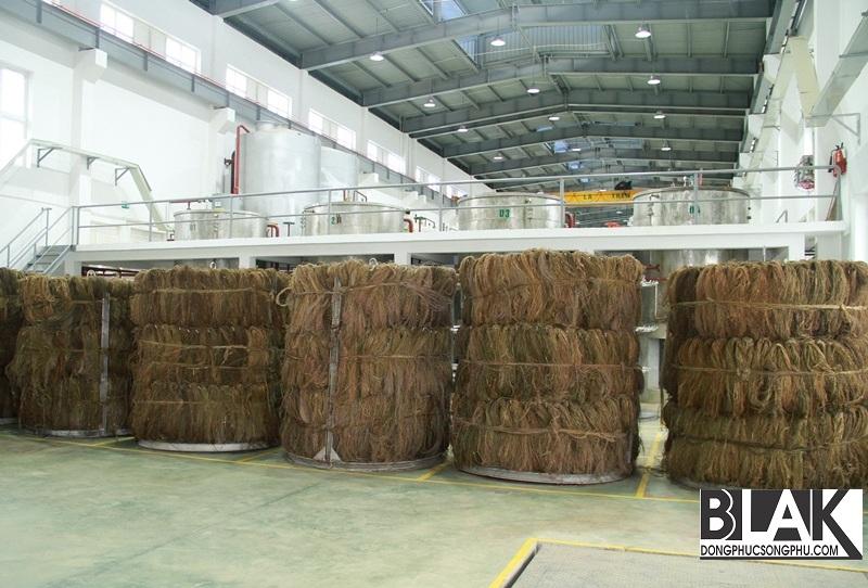 Vỏ cây dai dầu khô sẽ được măc vào lồng gai để bắt dầu tách keo