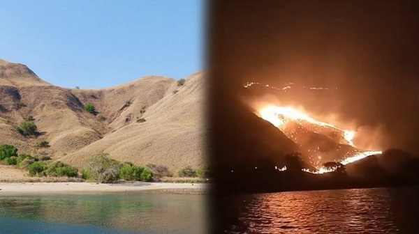 Inilah Orang Yang Diduga Pelaku Kebakaran Gili Lawa Taman Nasional Komodo