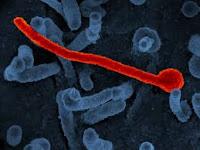 Ebola Virus - इबोला वायरस