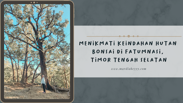 hutan-bonsai-fatumnasi-timor-tengah-selatan
