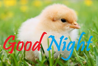 good night bird pic