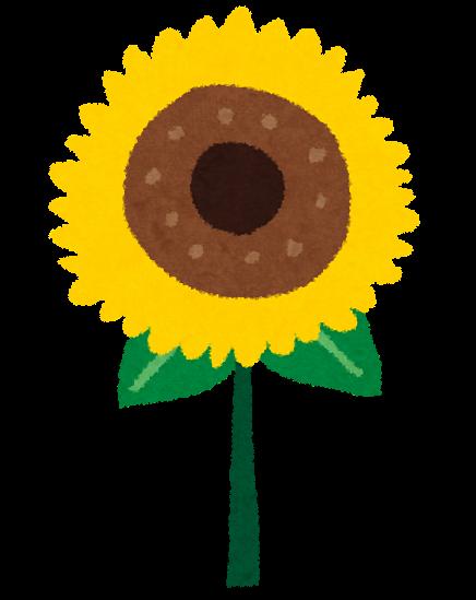 夏のイラスト向日葵 かわいいフリー素材集 いらすとや