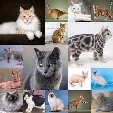 Jenis Jenis Kucing Peliharaan Yang Populer Dari Seluruh Dunia