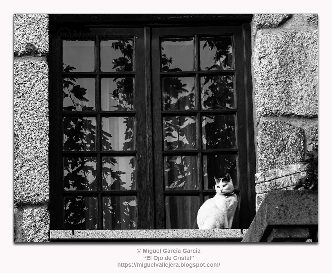 Gato con ventana.