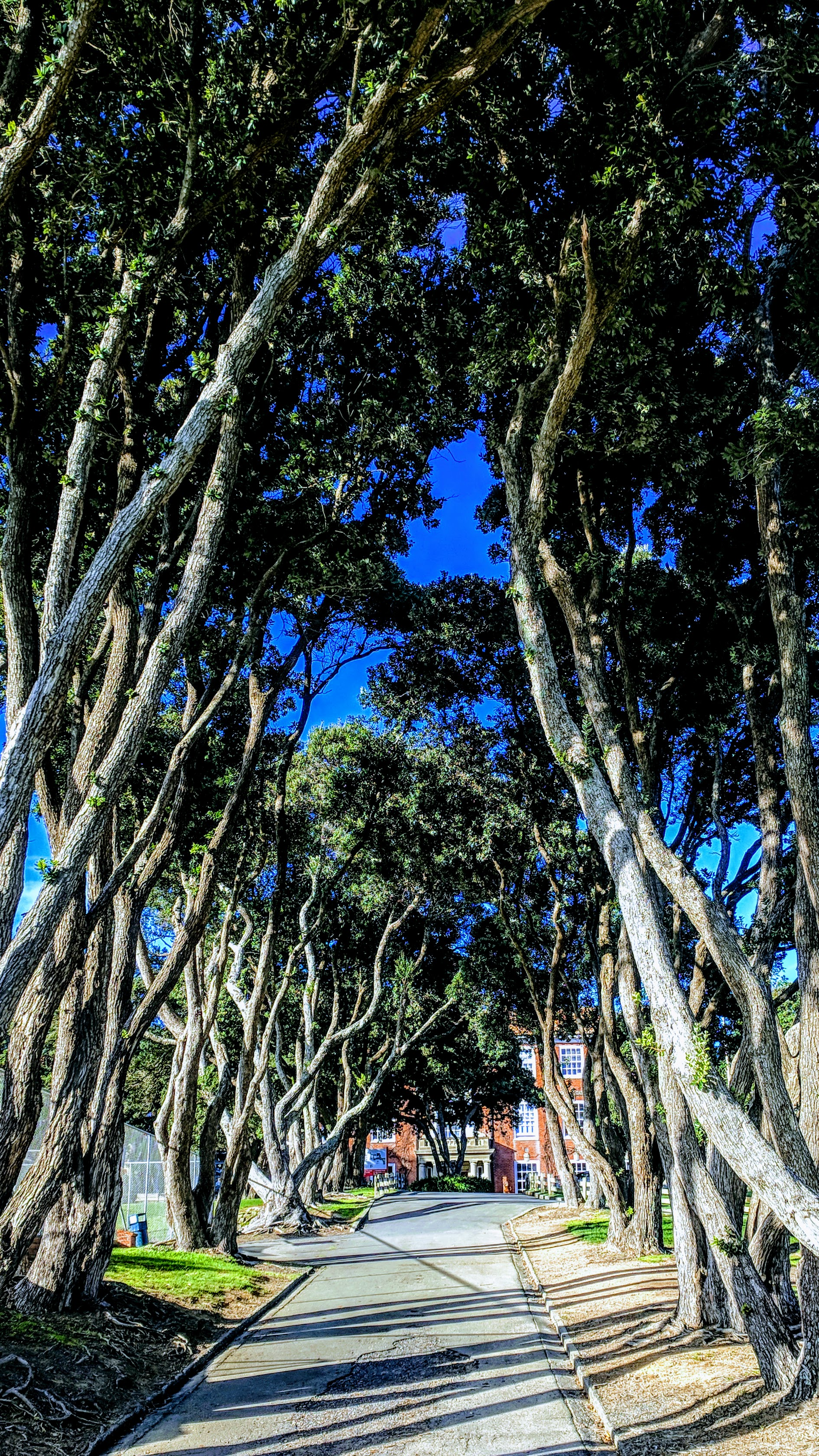 Scots College tree lined drive, Strathmore in Wellington (NZ))