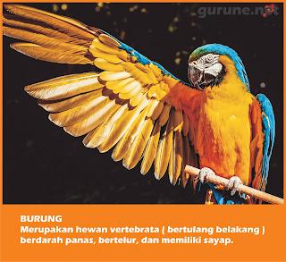 Fakta Unik Burung
