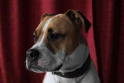 أشرس 10 سلالات من الكلاب في العالم ! الجزء الثالث