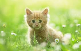 New Baby Cats Animal Hd Wallpaper5