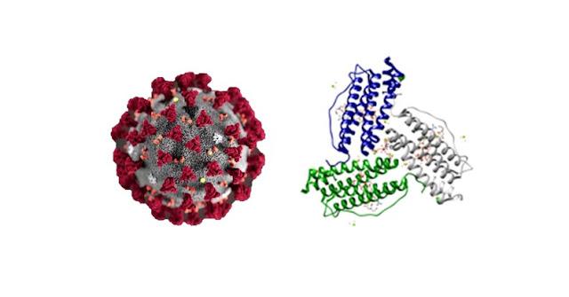 اختبار الفيريتين وعلاقته بفيروس كورونا