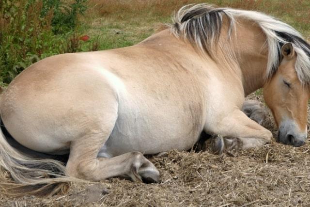 comment-dort-un-cheval