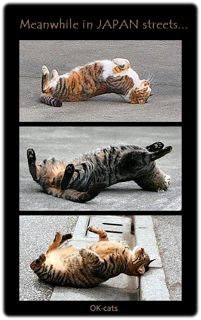 Photoshopped Cat GIF • Meanwhile in Japan feral cats are doing weird Yoga in the streets, haha!