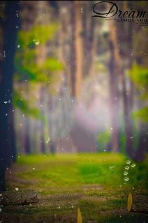 Dream Nature Blur Cb Background Free Stock
