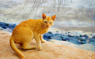 We often see how animals are afraid of us, like this cat. This may very well be a plan of the creator. These articles explore this idea from the Bible and science.