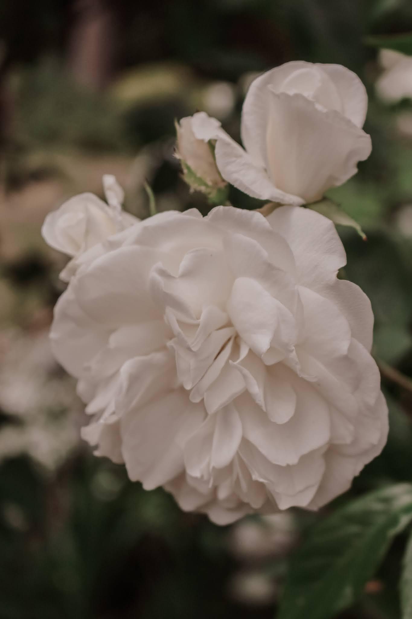 soft white flowers