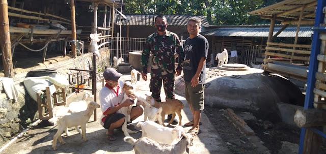 Kodim Sragen - Danramil Gemolong Kunjungi Peternakan Kambing