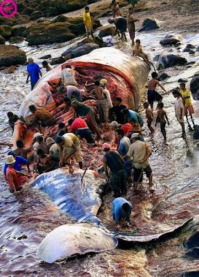 أكبر كائن حي في العالم .. الحوت الأزرق
