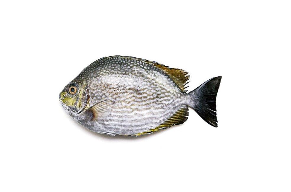Ikan%2BBaronang