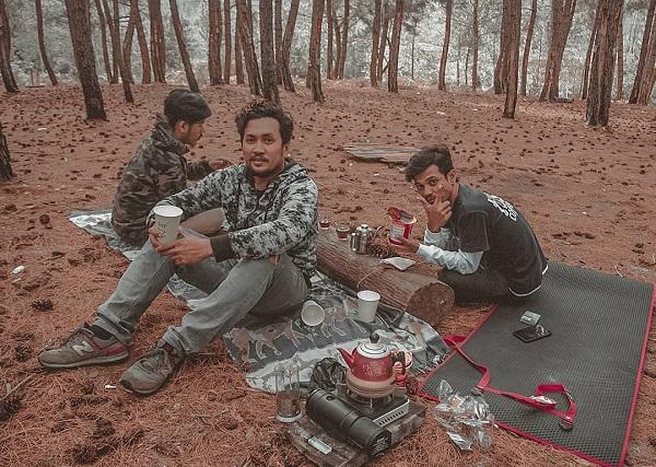 Hutan Pinus Padang Napu