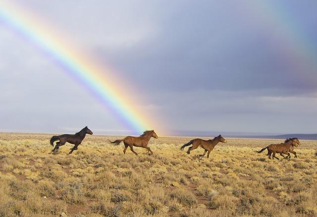 Gambar pelangi dan kuda