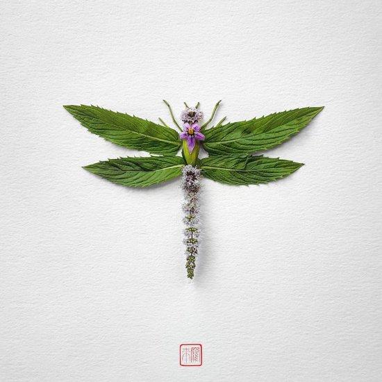 Raku Inoue reikan_creations arte instagram fotografia insetos feitos de flores plantas
