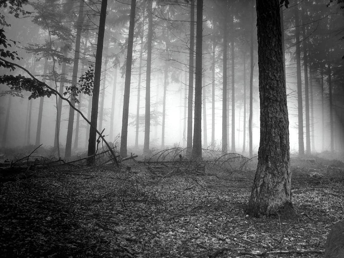 Fondo De Pantalla Naturaleza Niebla En El Bosque Tenebroso