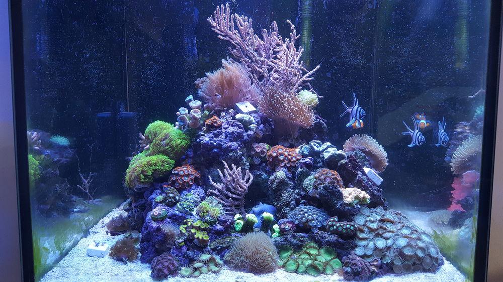 L 39 aquarium la maison for Aquarium a la maison