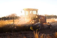 Wheat Harvest - Photo by Noah Buscher on Unsplash