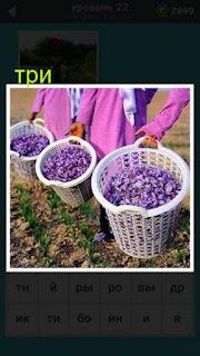 три женщины держат три корзины в которых собраны фиолетовые лепестки