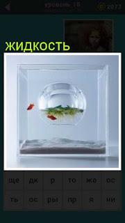 внутри стеклянного квадрата находится круглый аквариум с жидкостью