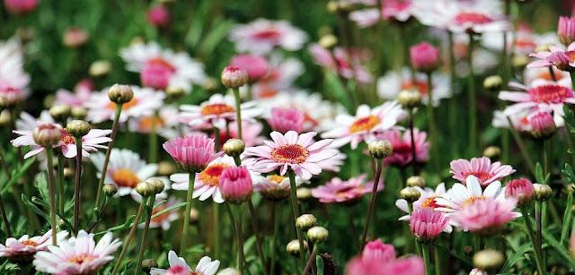 10 Beginner Gardener Mistakes Should We Avoid