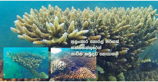 Kankasenthurai Navy discover beautiful coral reef