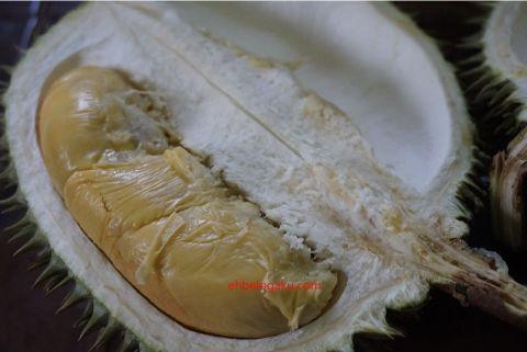 durian isi oren,durian IOI,Musim durian