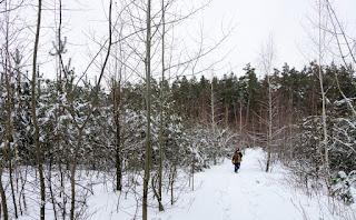 ліс на станції Будинок відпочинку