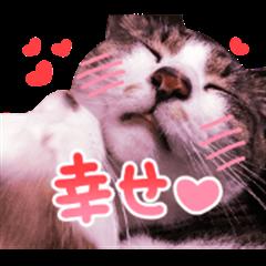 Good friends cat Koo-chan Ghee-chan